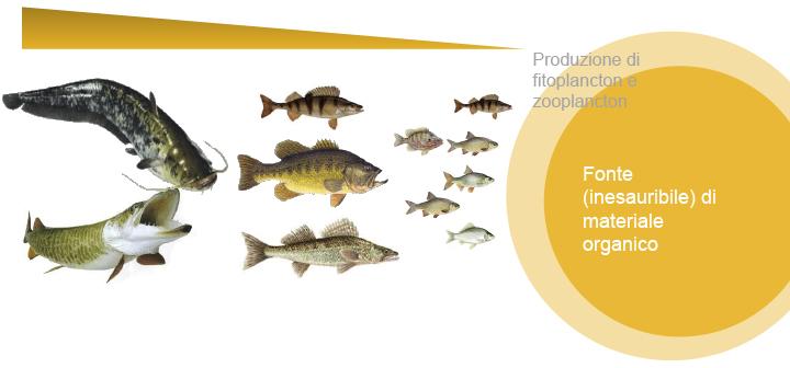 molti più pesci datazione Collegare il riscaldatore della piscina del propano